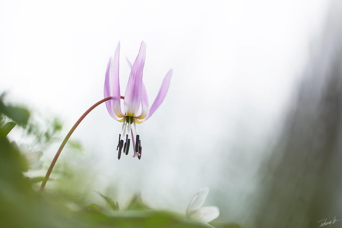 soft spring...