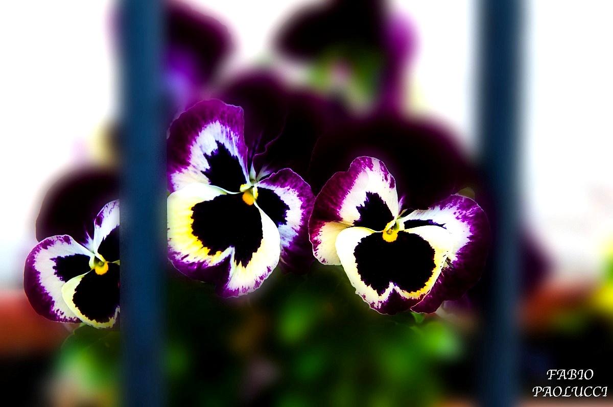 3 flowers in prison...