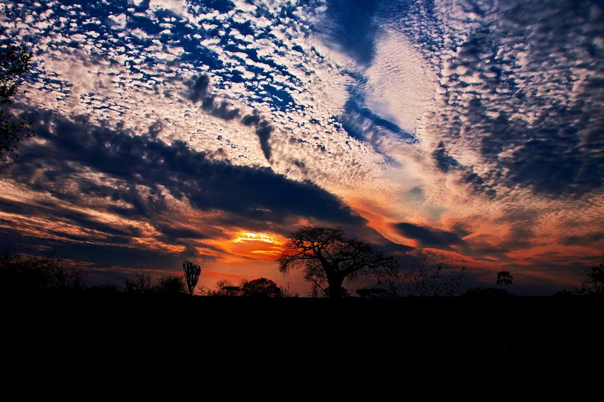 Sunset in the savannah-2...