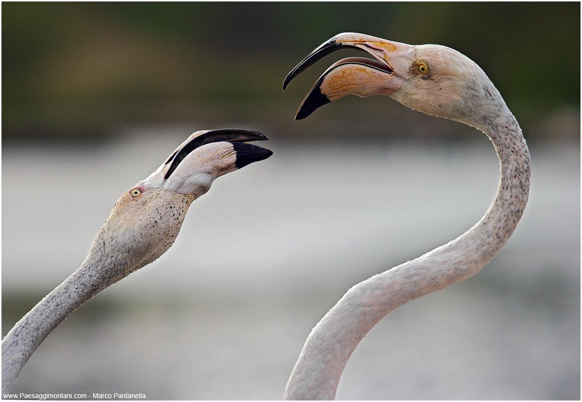 Quarrel...