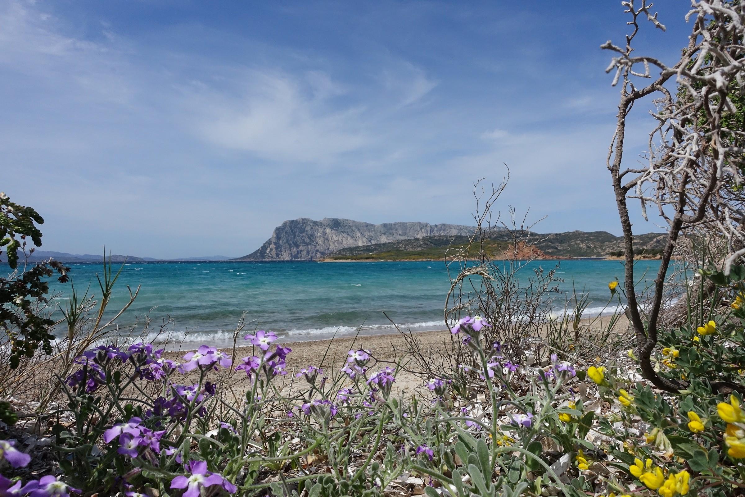 Sardegna, isola di Tavolara...