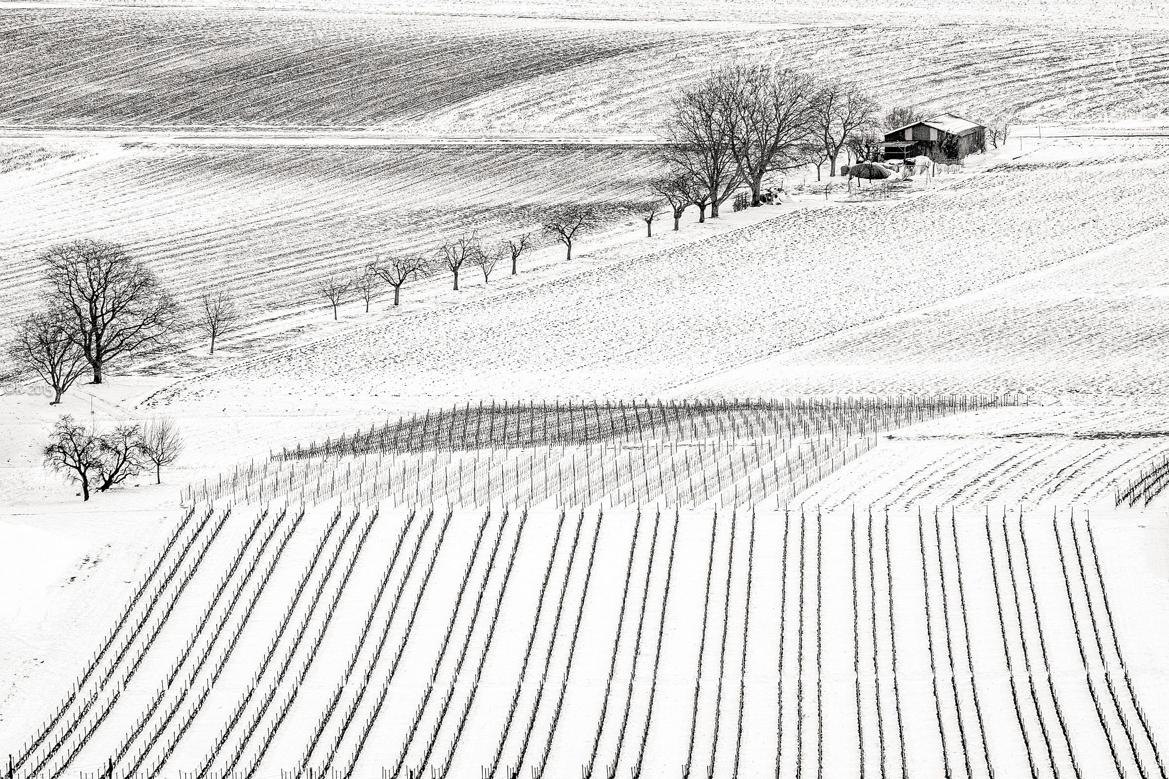 Winter Drawing...