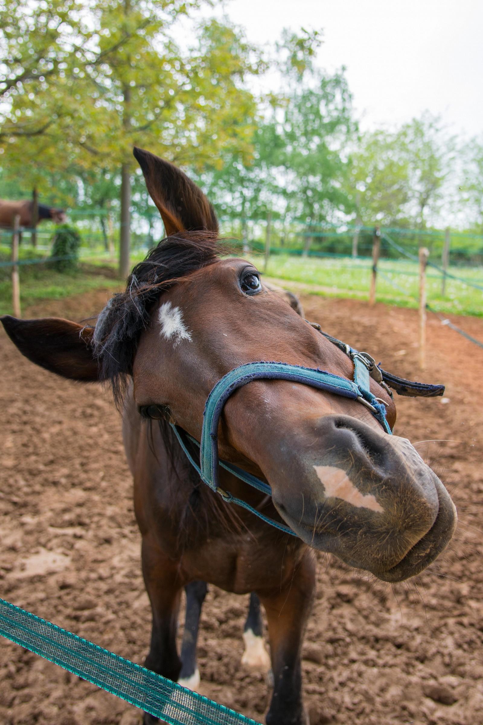 cavallo curioso!...