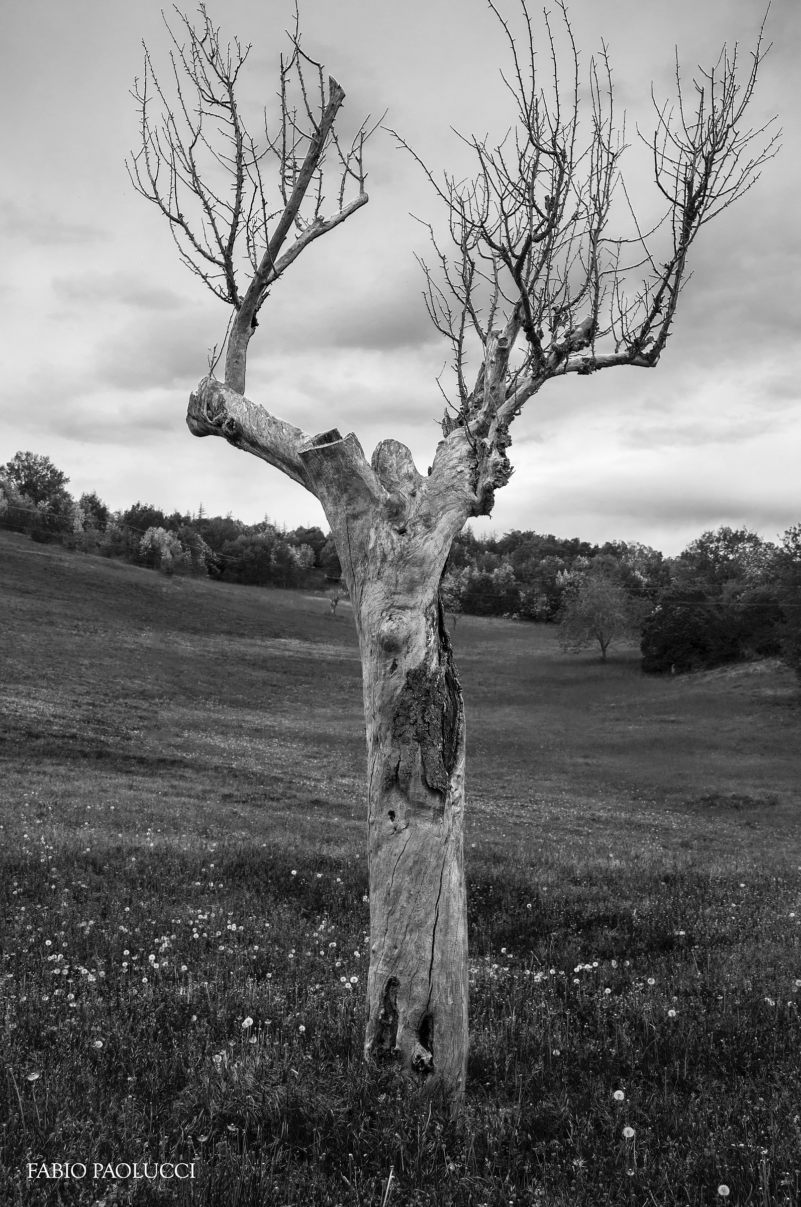 The Tree Abandoned...