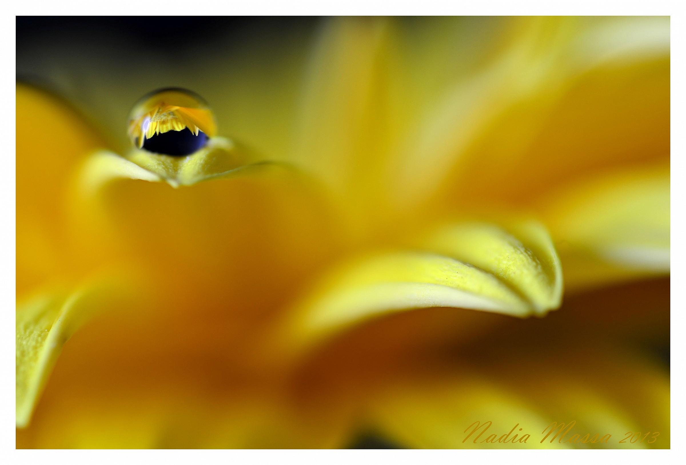 Yellow gerbera...