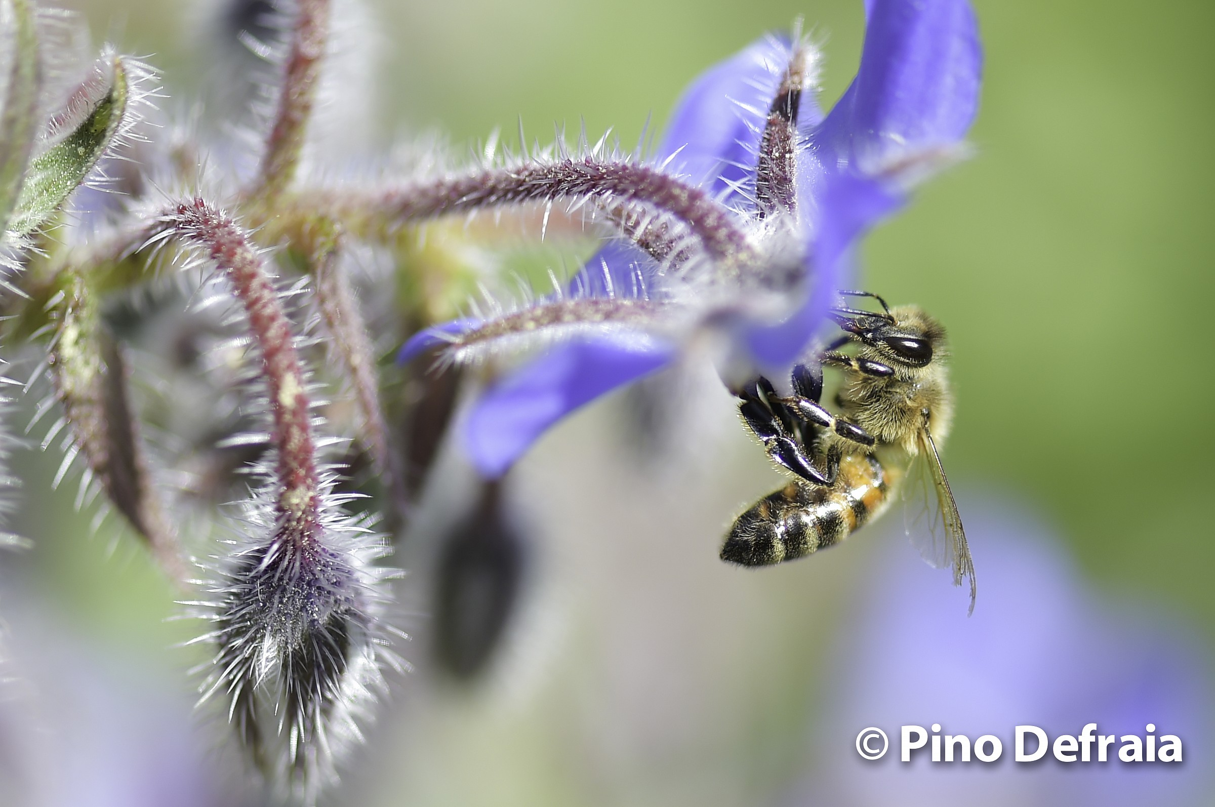 Pollination is the transport of pollen...