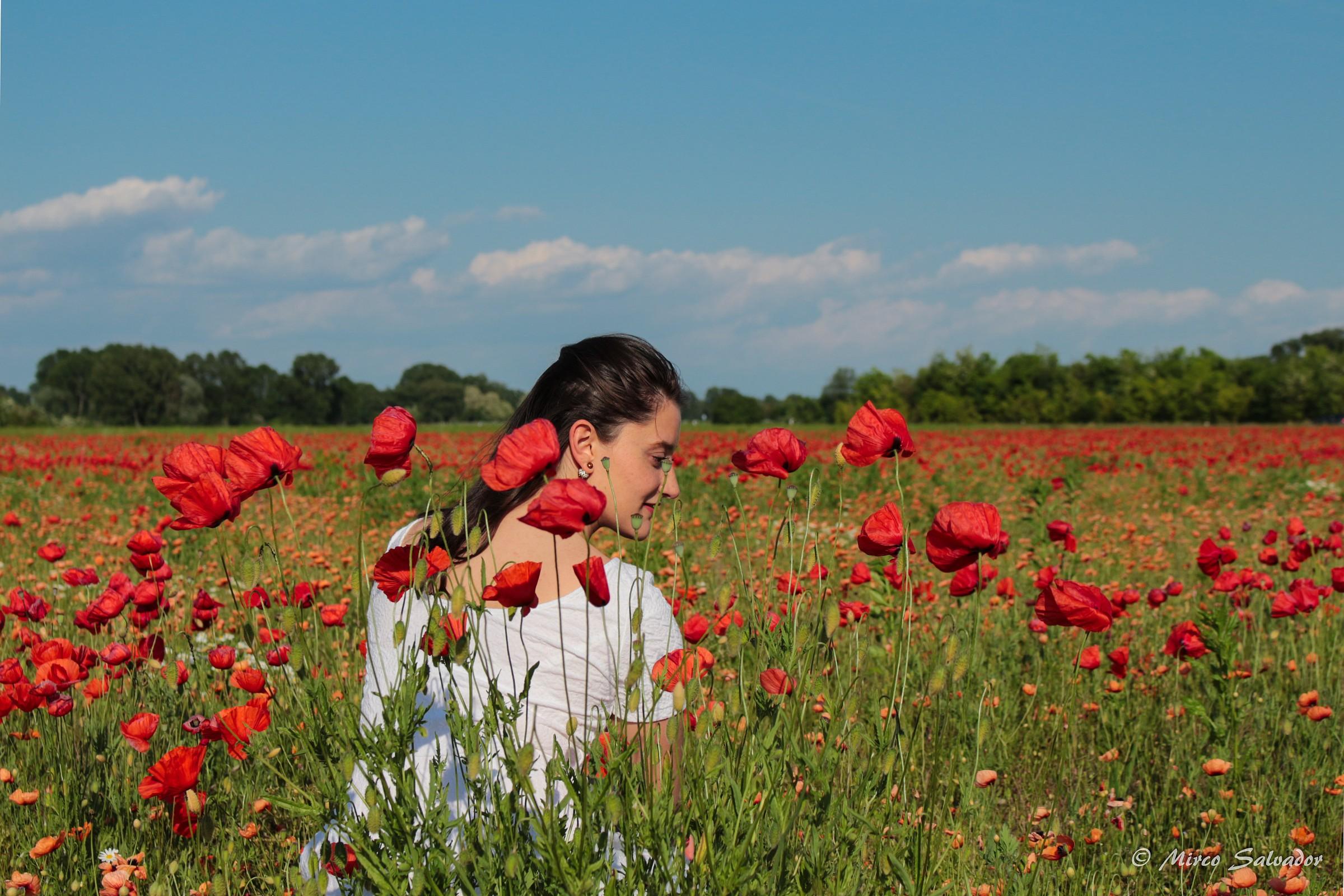 Poppies 2...