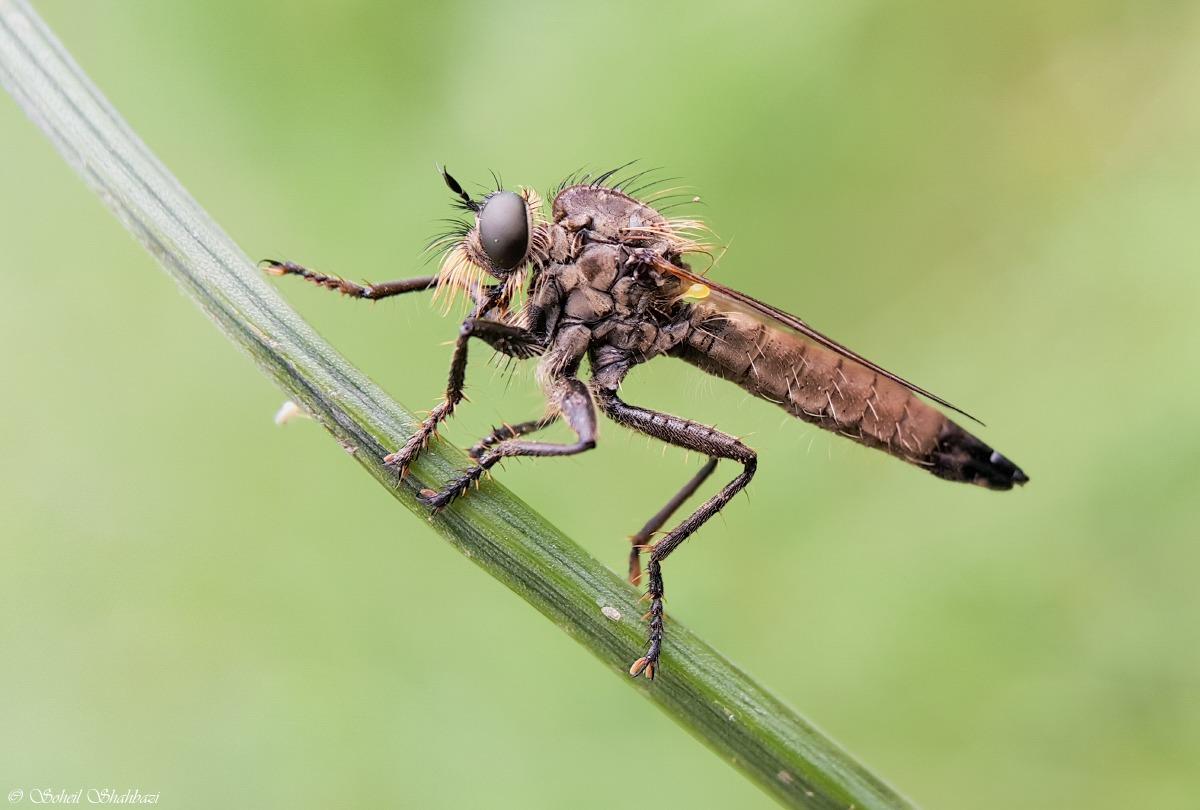 Roberfly...
