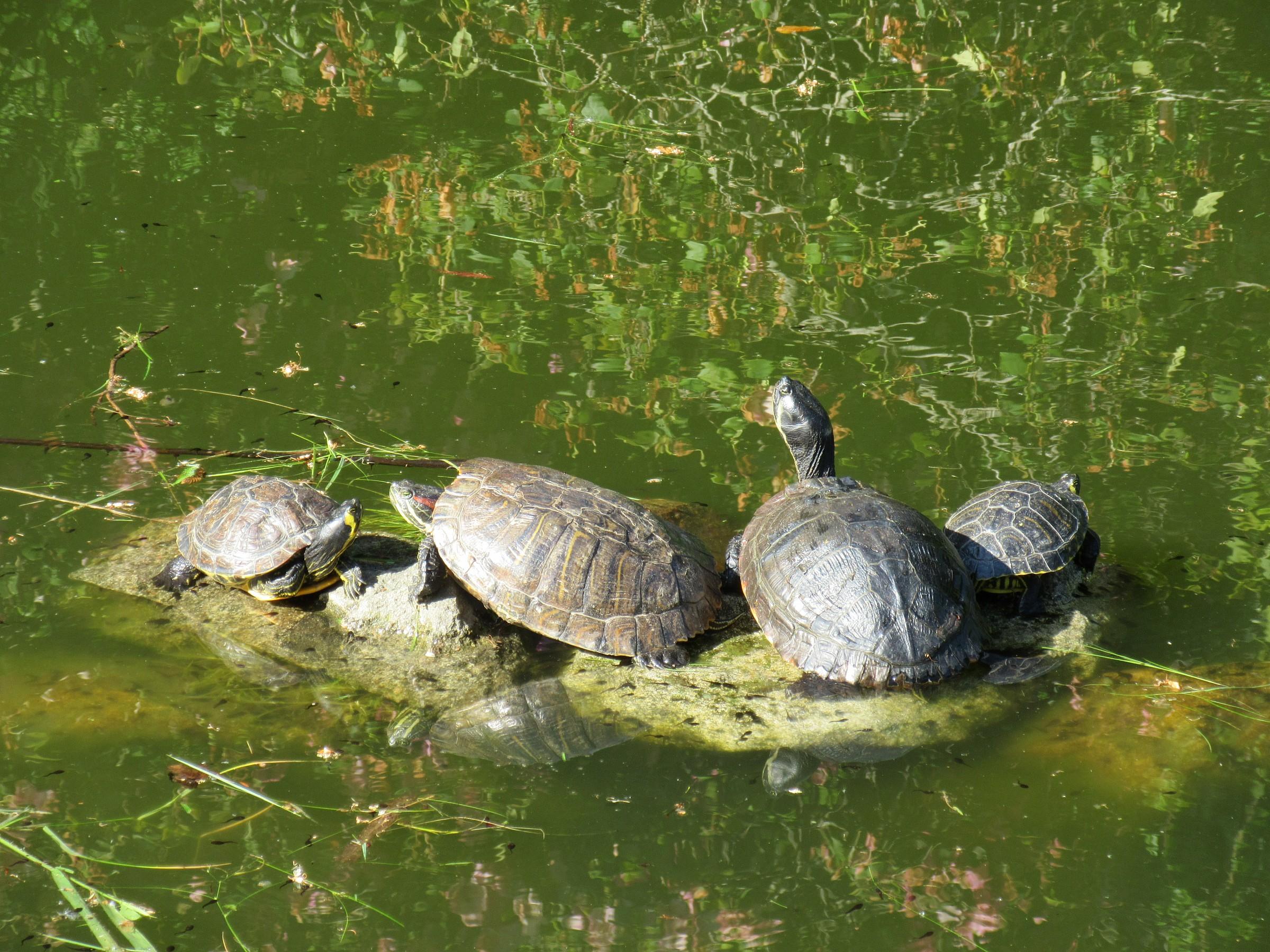 riflessi con tartarughe...