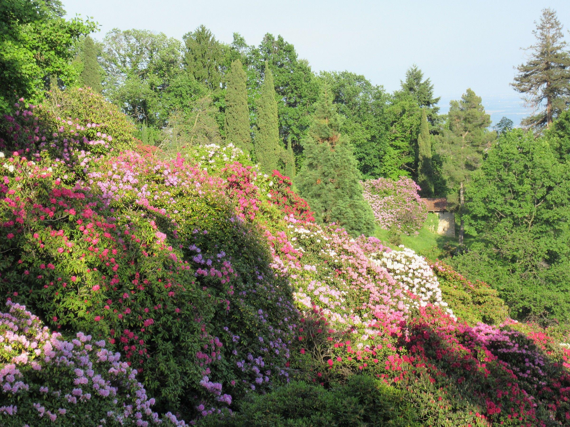 conca dei rododendri...