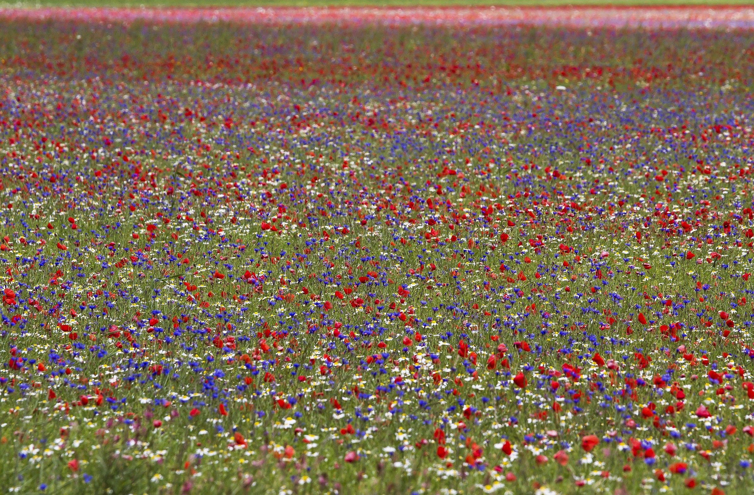 United colors of Castelluccio nr 2...