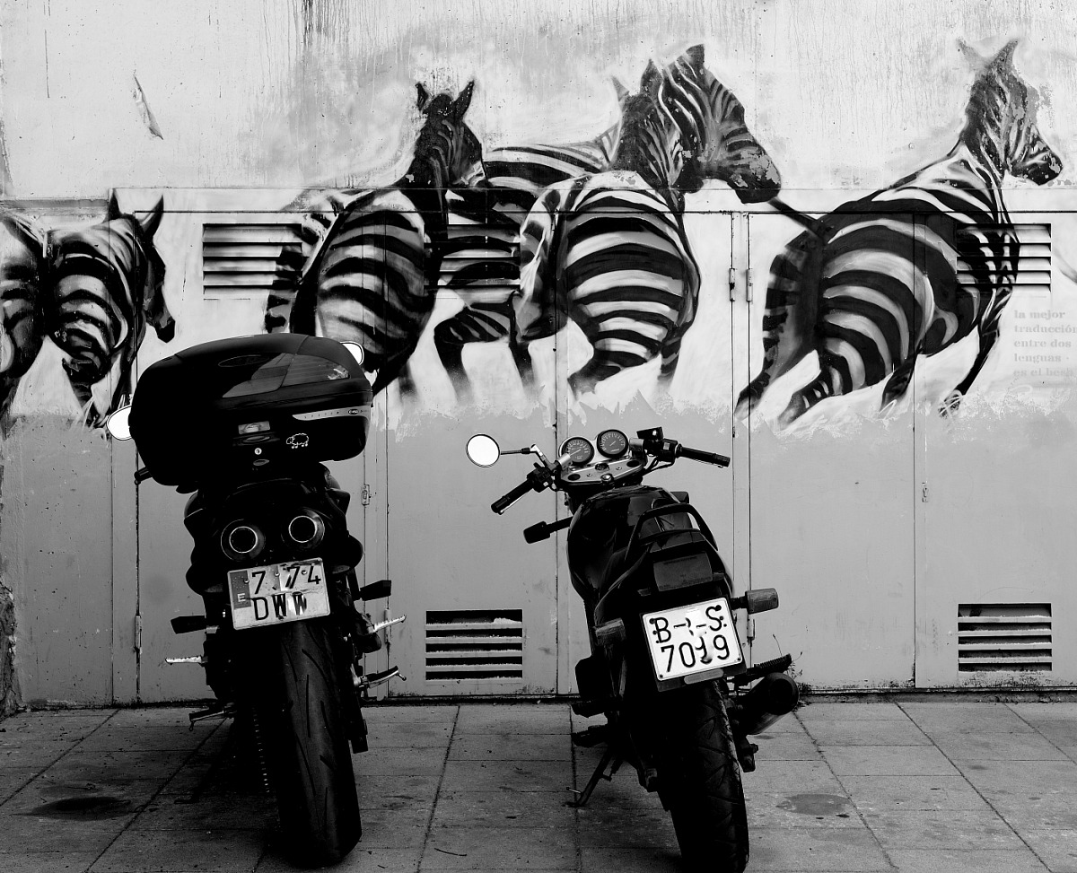 Cavalli a confronto...