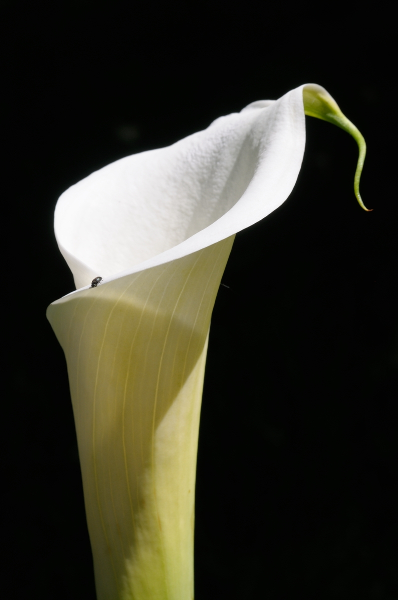 calla with passenger...