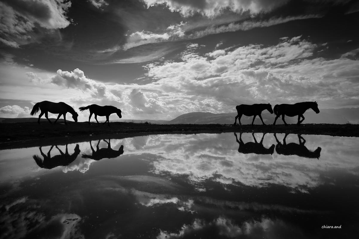 Nella Terra dei cavalli ... di luce...