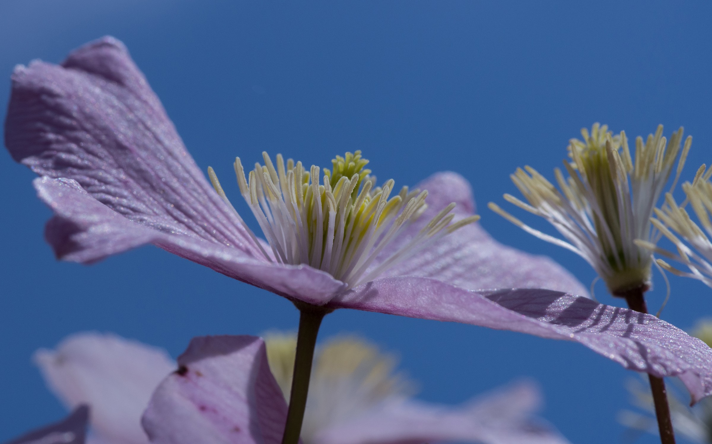 a flower in my garden...