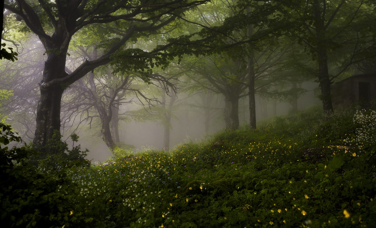 In the forest with fog...