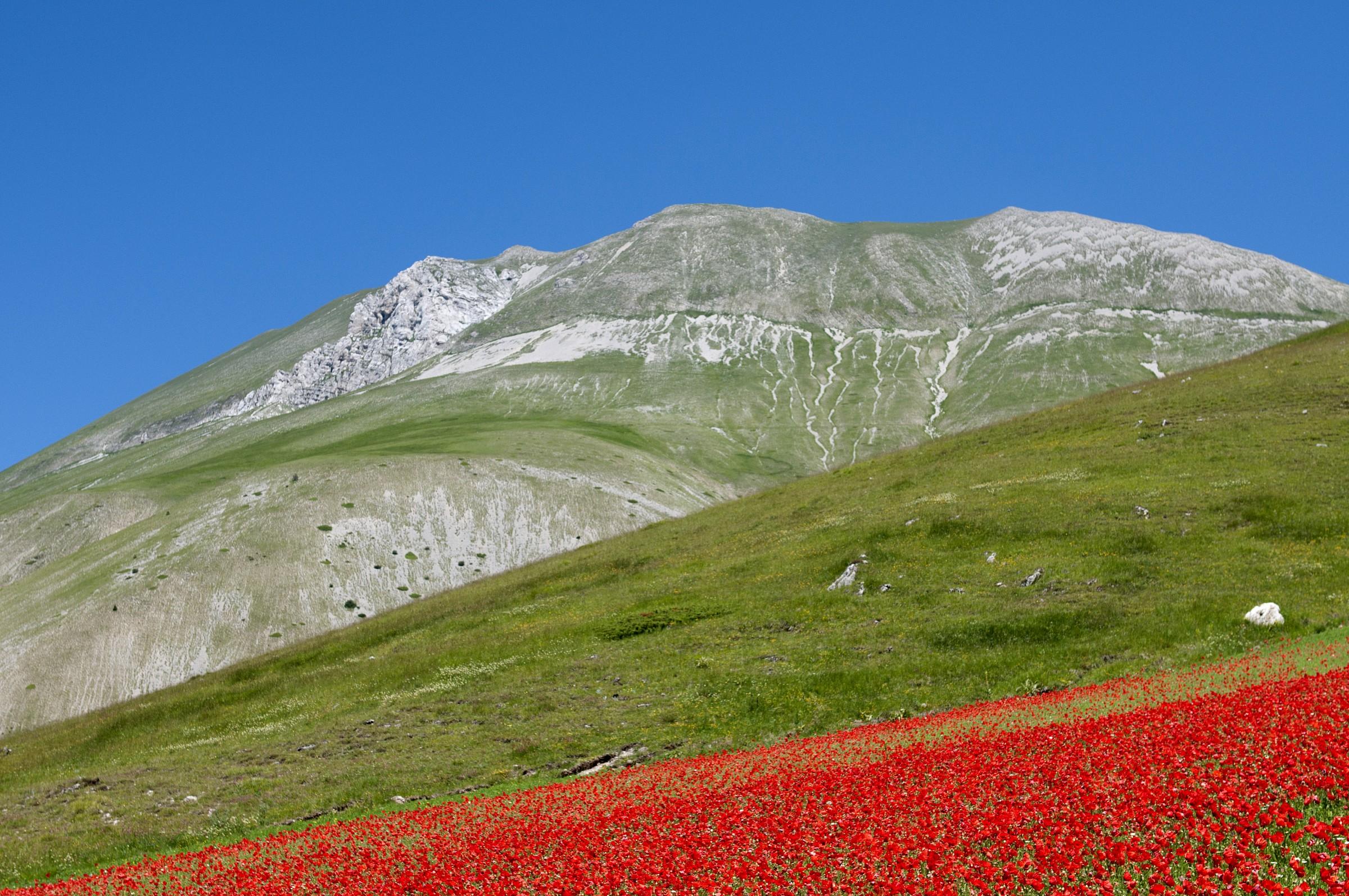 Castelluccio ... Mount Carrier. .....