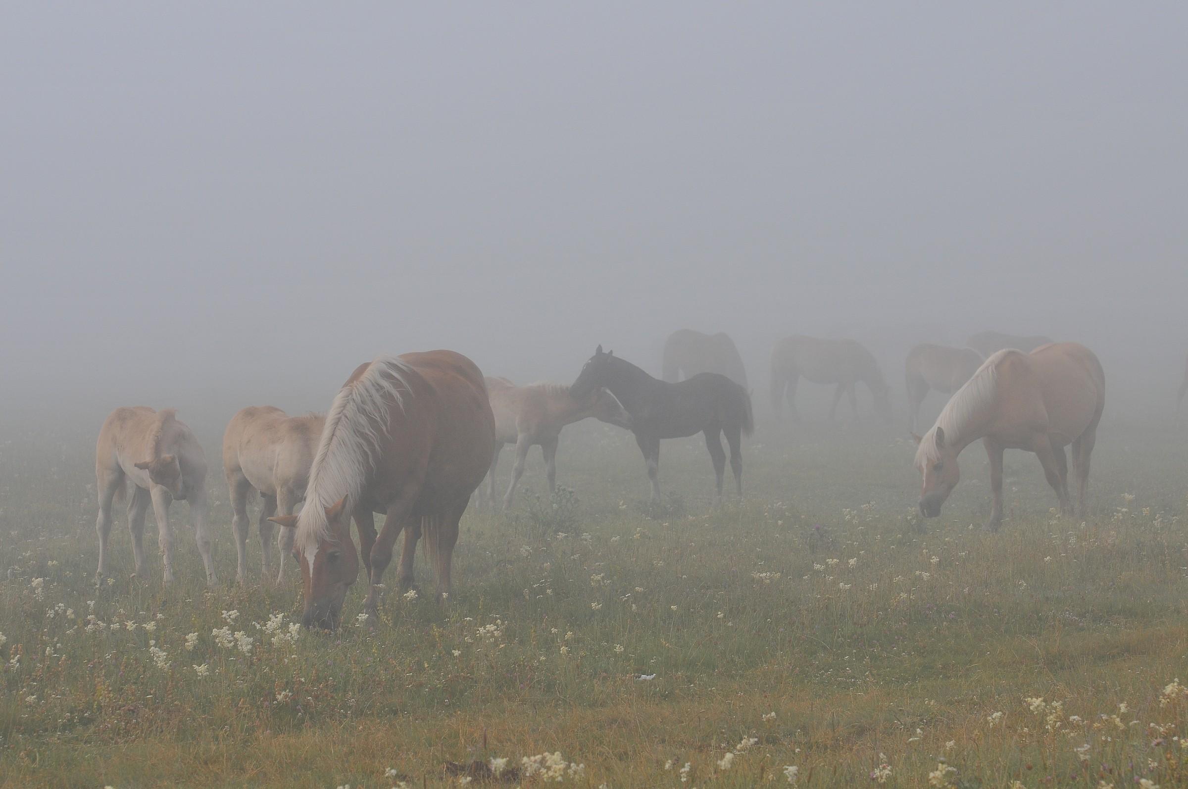 Castelluccio horses grazing...