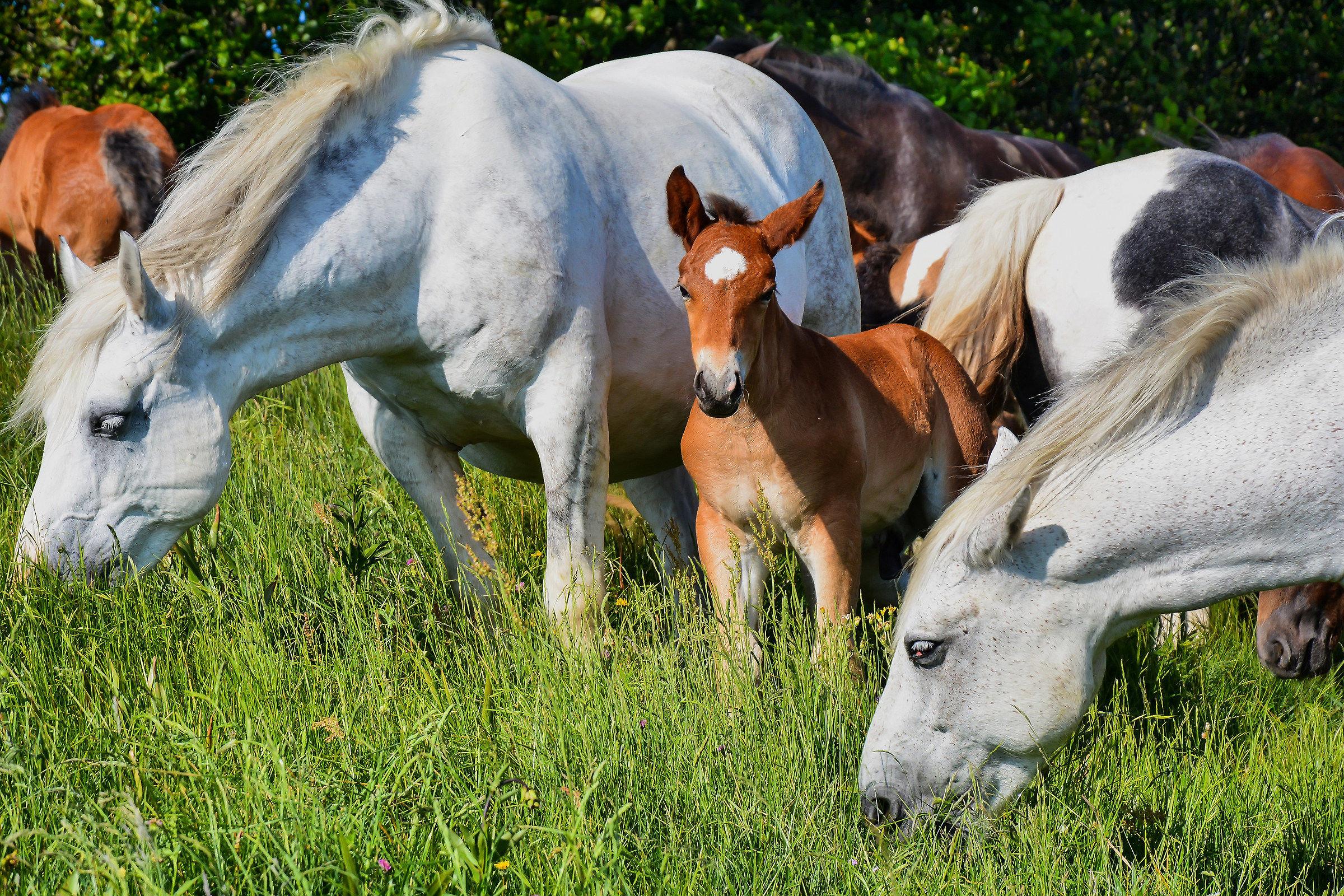 cavalli liberi al groppo del vescovo...