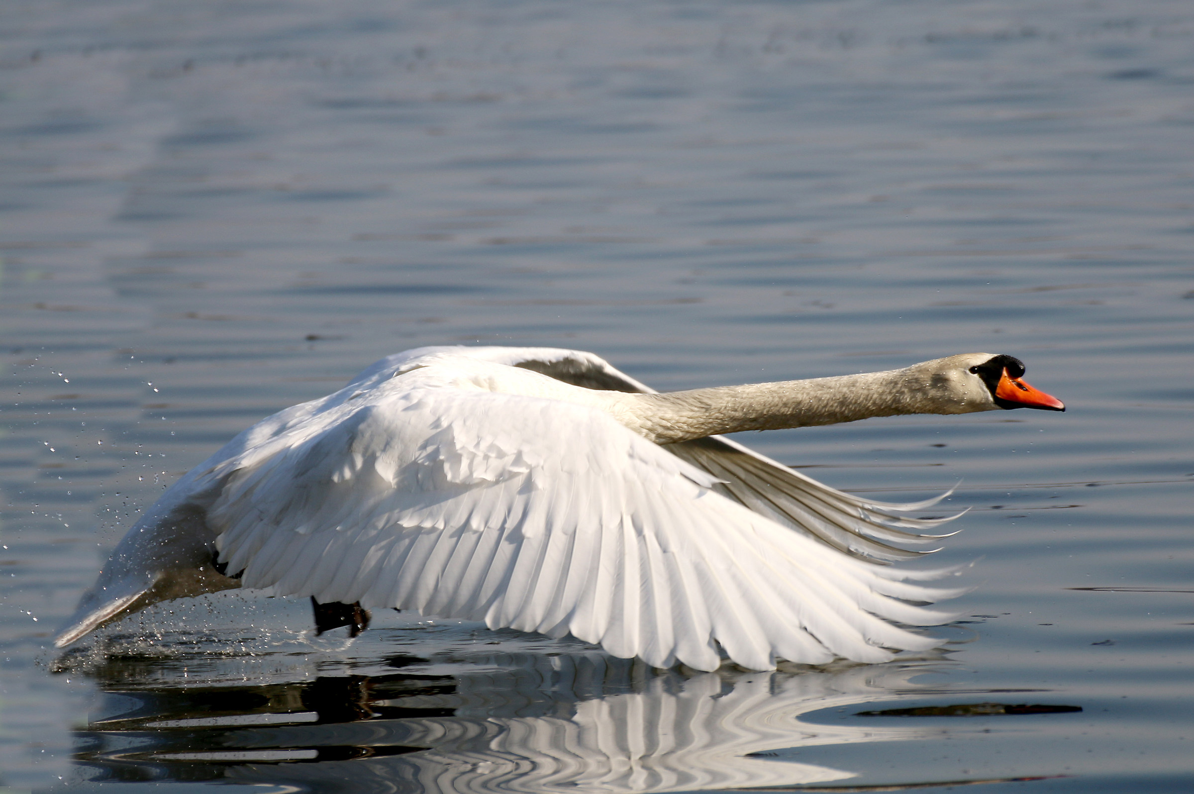 The Flight of the Swan 2...