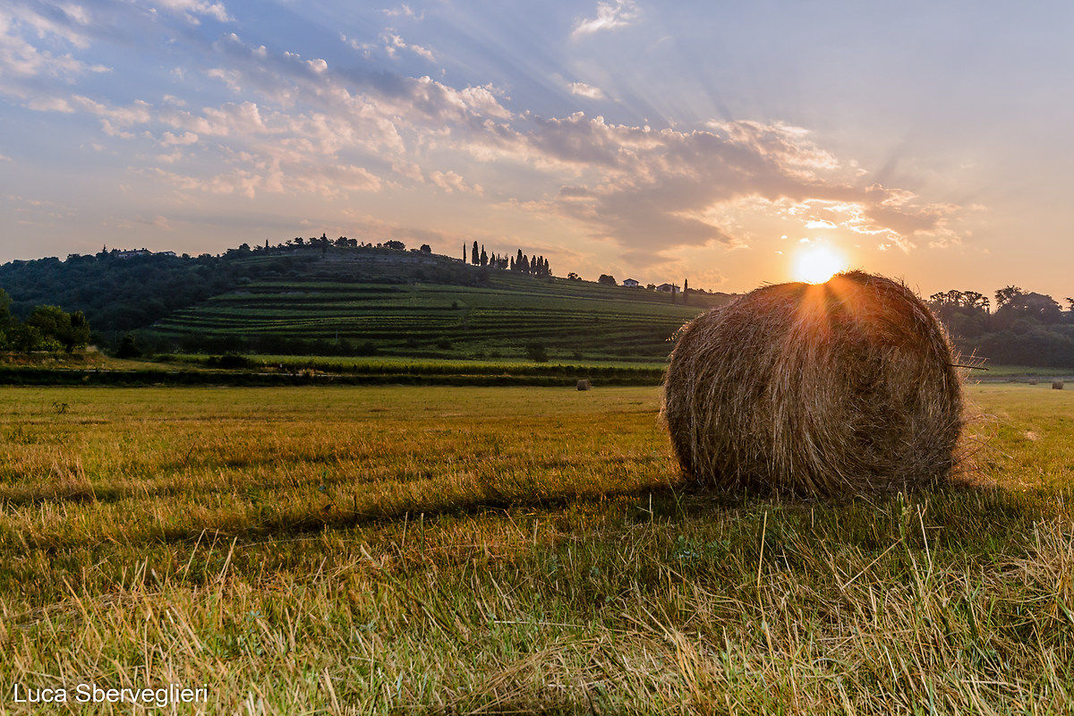 Sun and hay...
