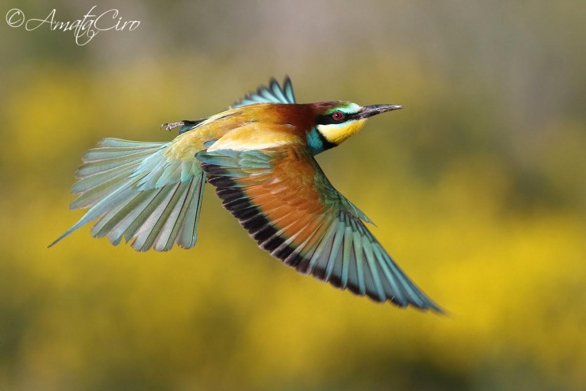 Eater in flight...