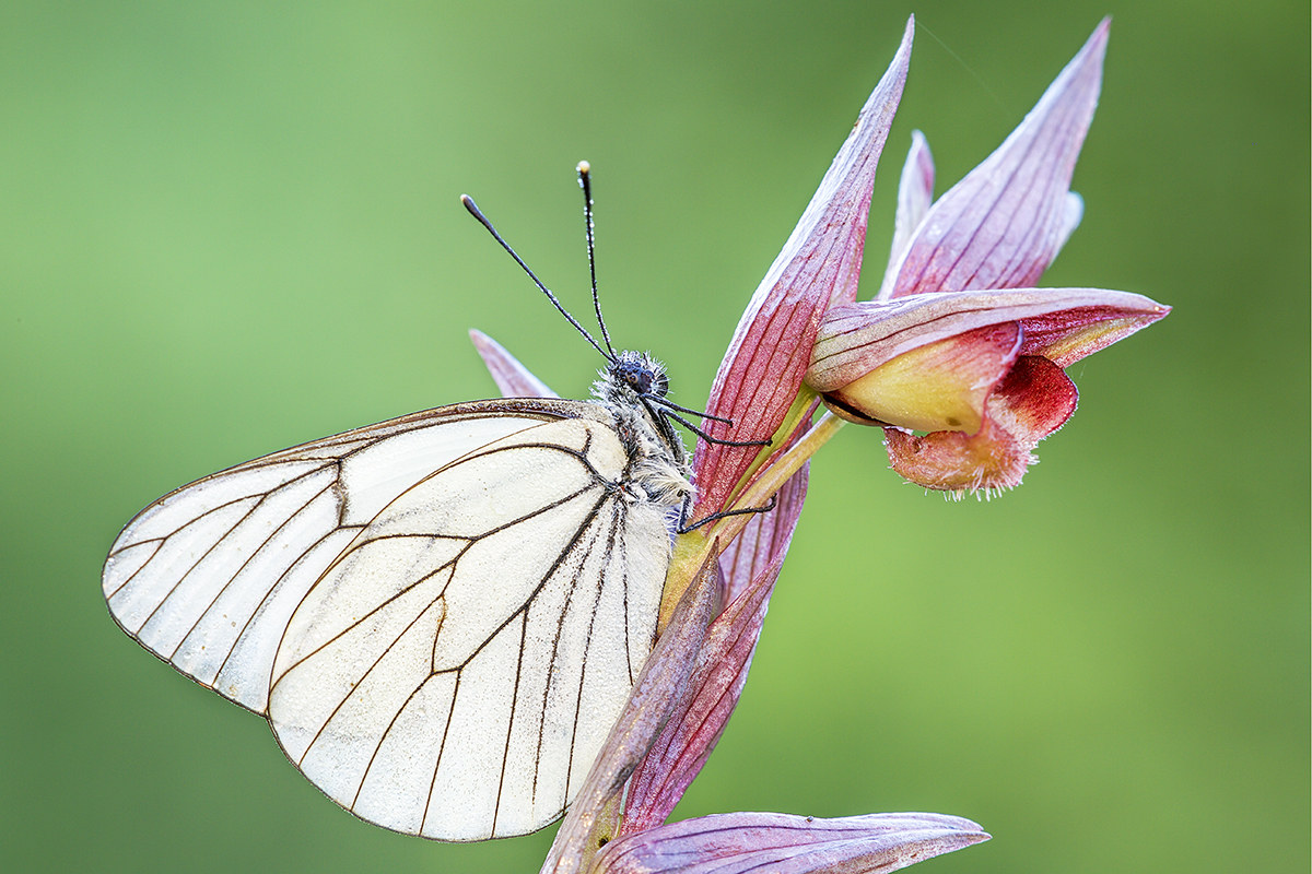 butterfly on orchid...