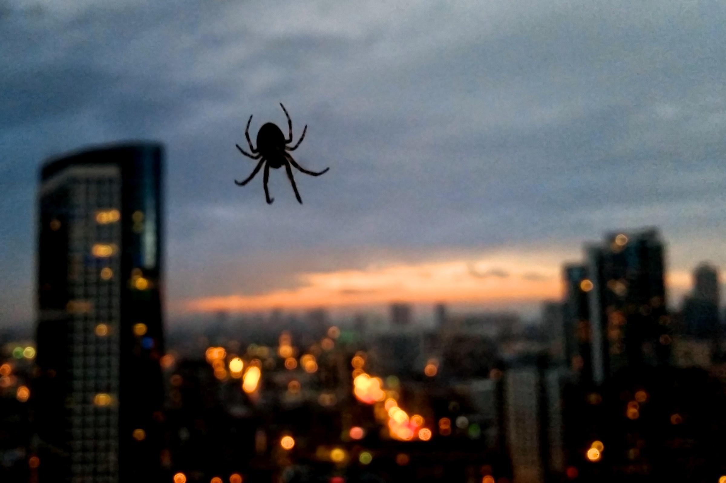 A spider on my window...