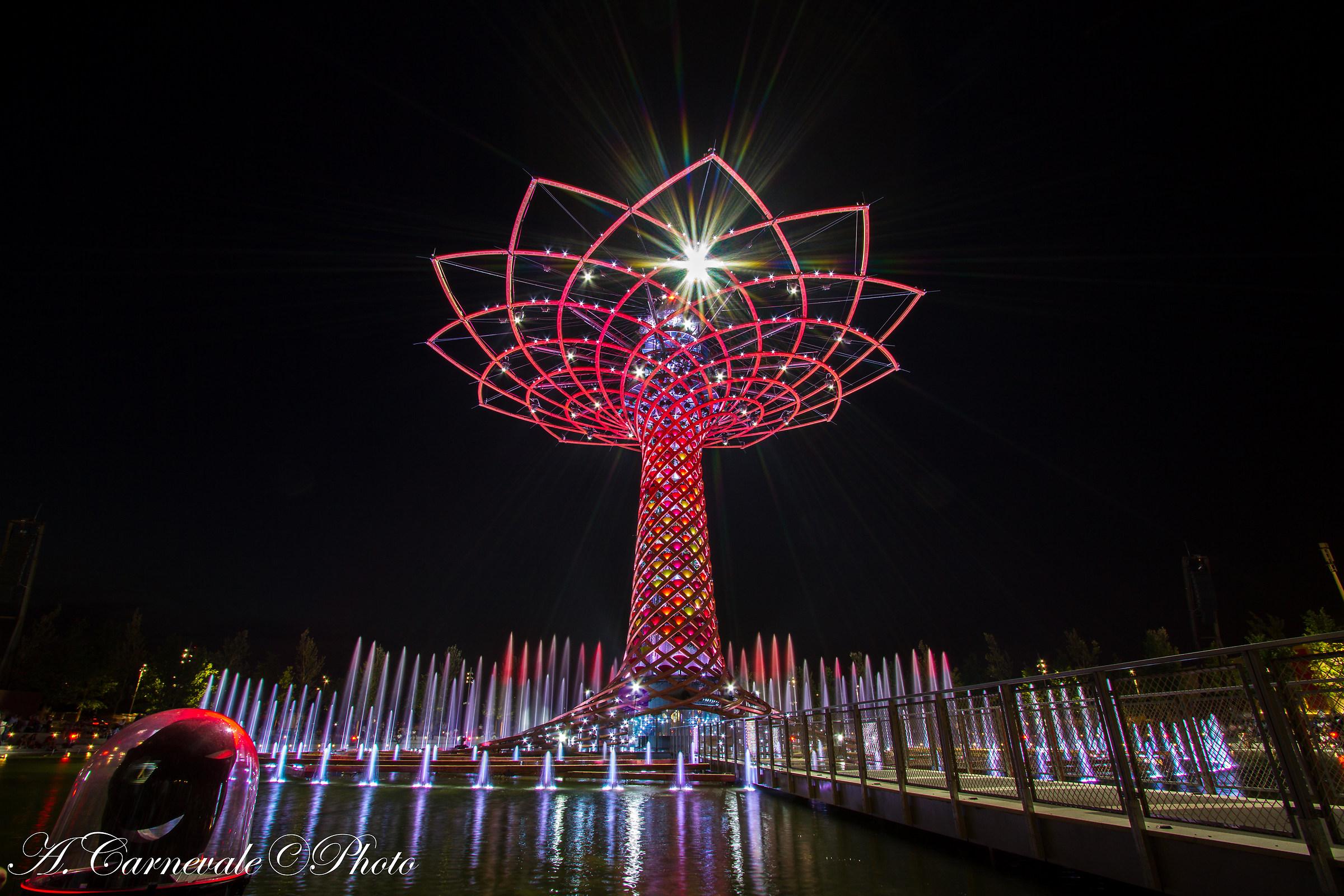 Tree of Life expo...