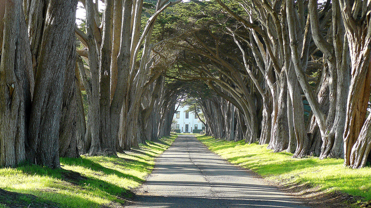 Point Reyes - Sir Francis Drake Boulevard...