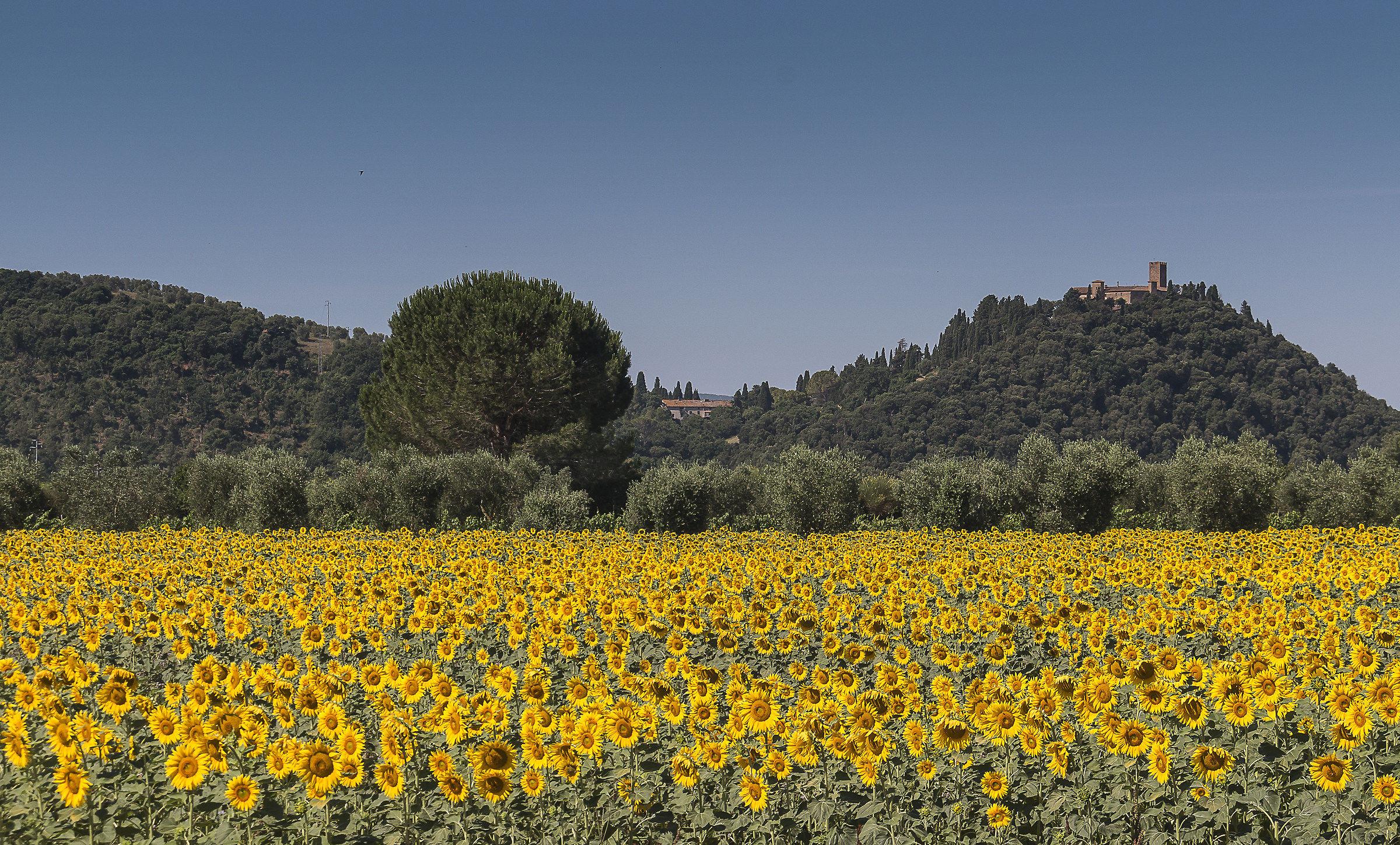 The castle of Marsigliana...