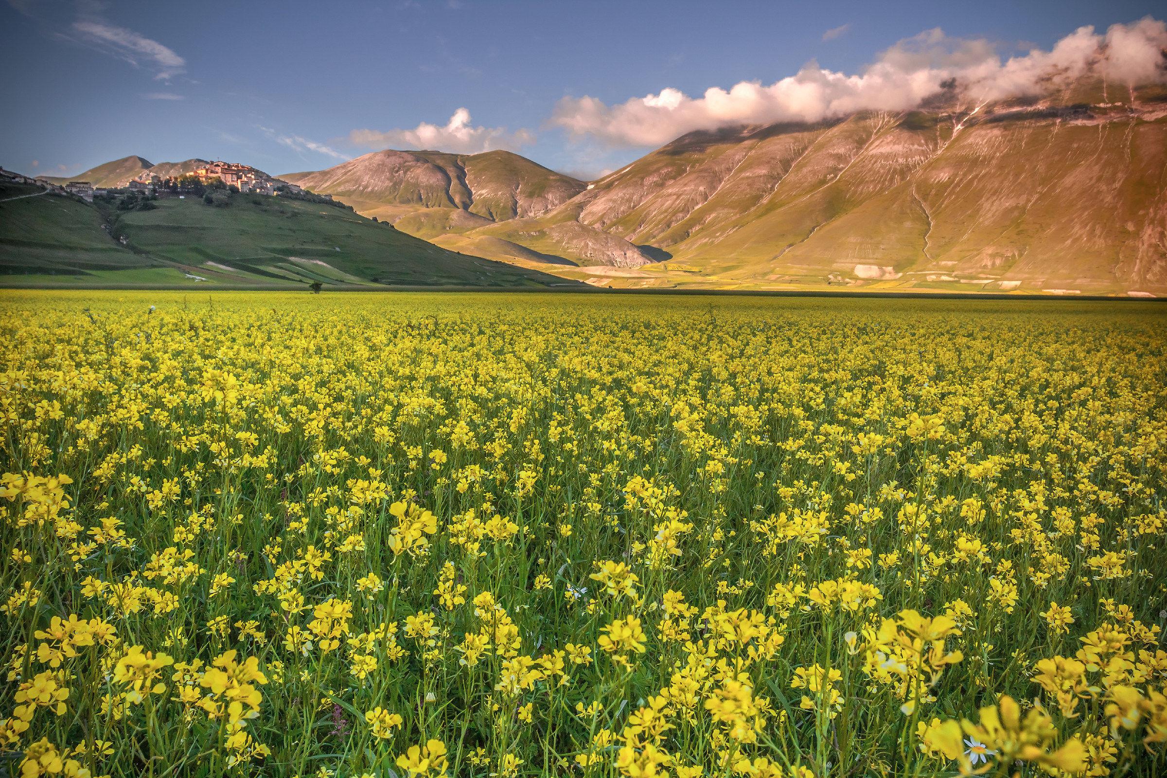 Di giallo fiorito......