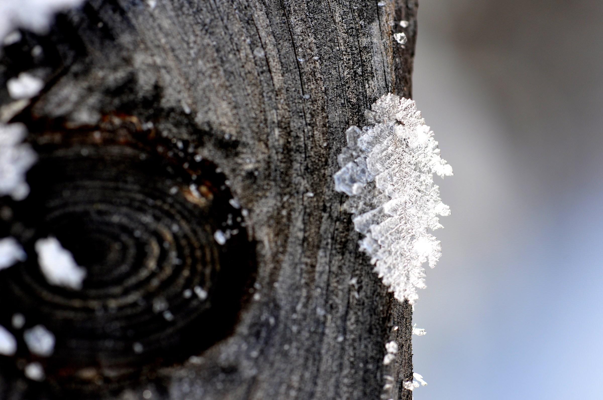 foglie di neve 2...