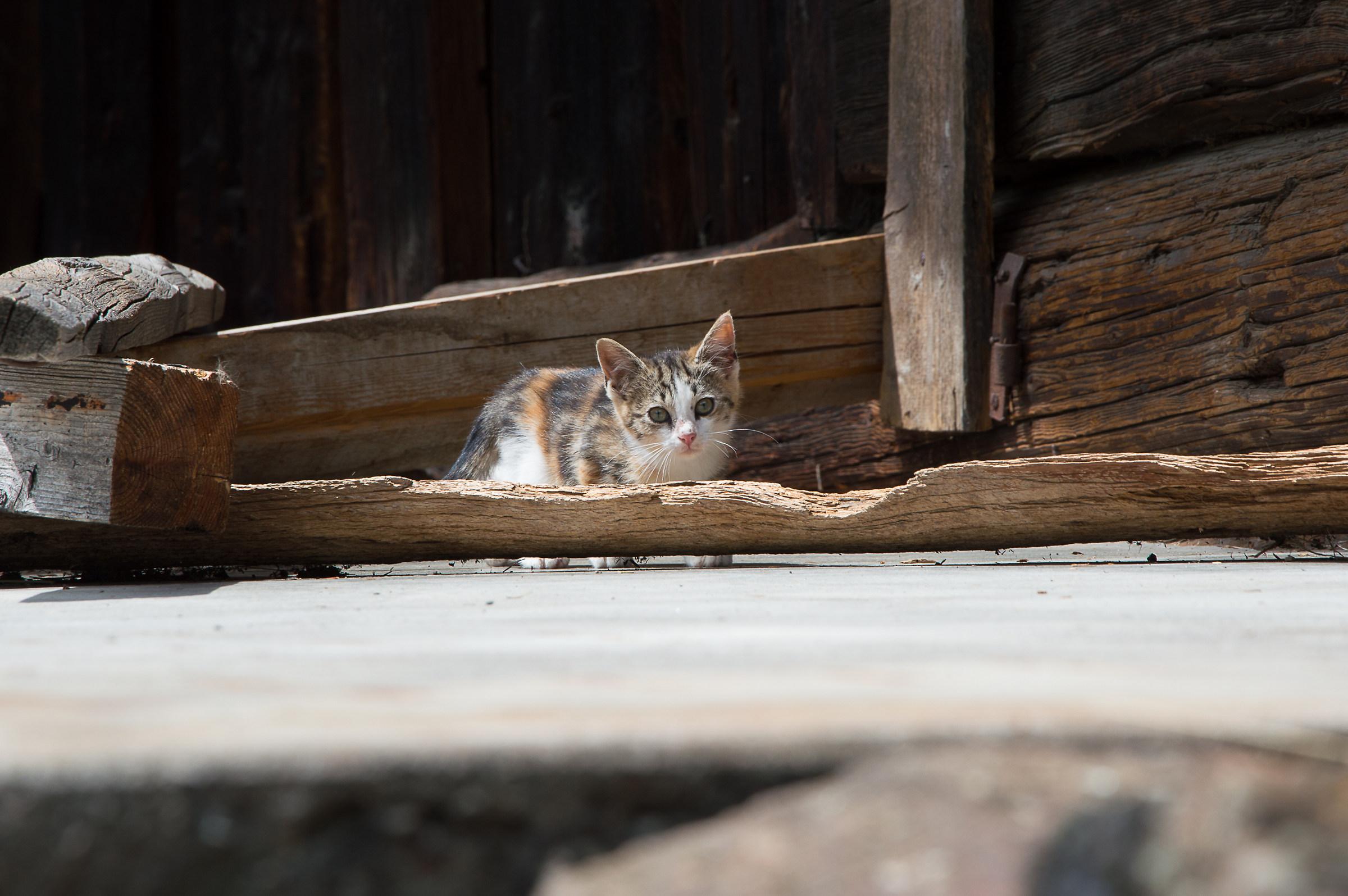 Gattino...