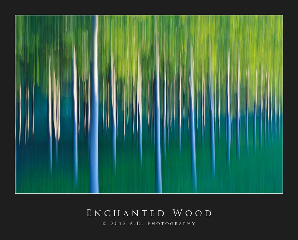 Enchanted Wood...