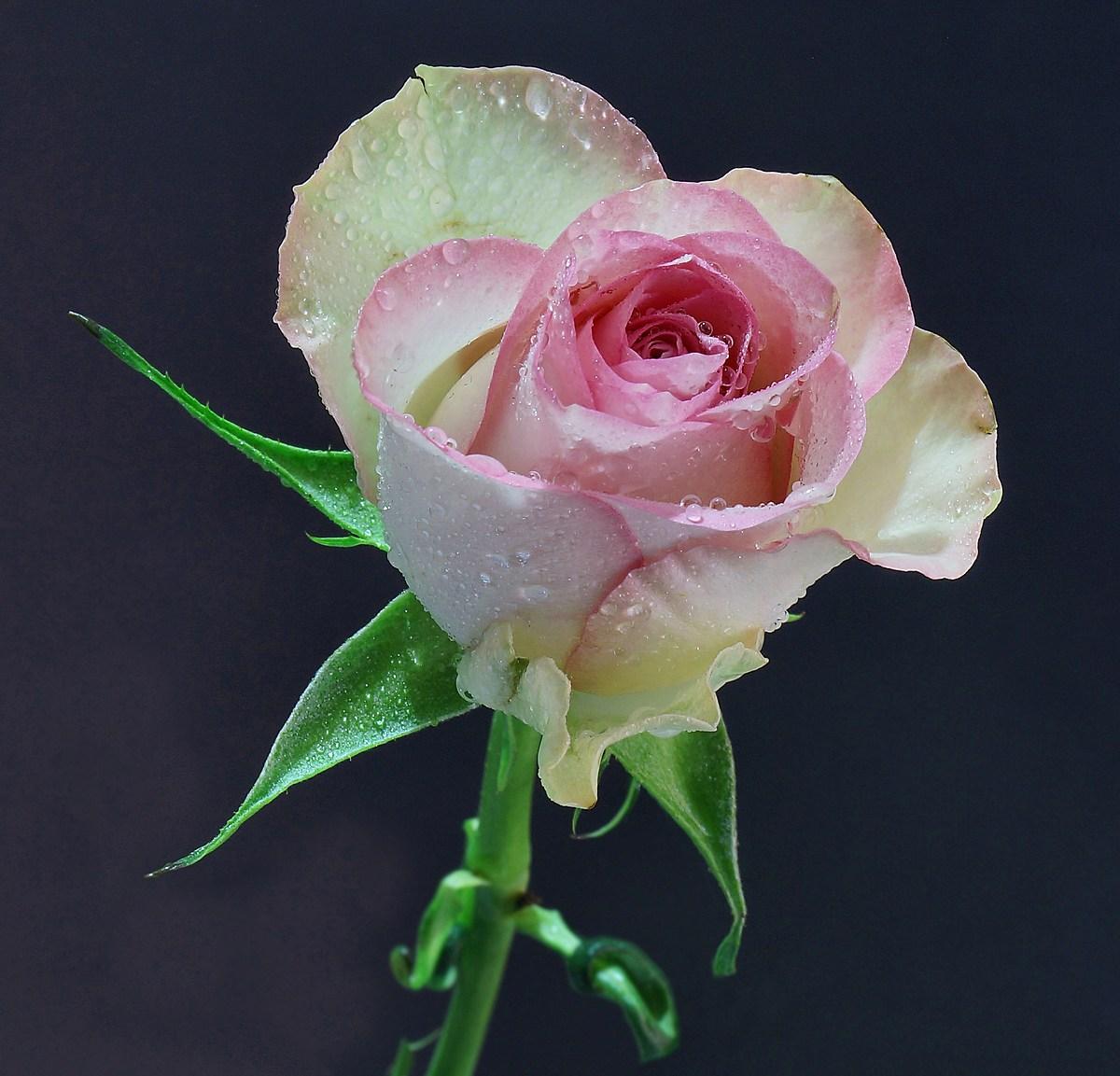 A pink heart pink...