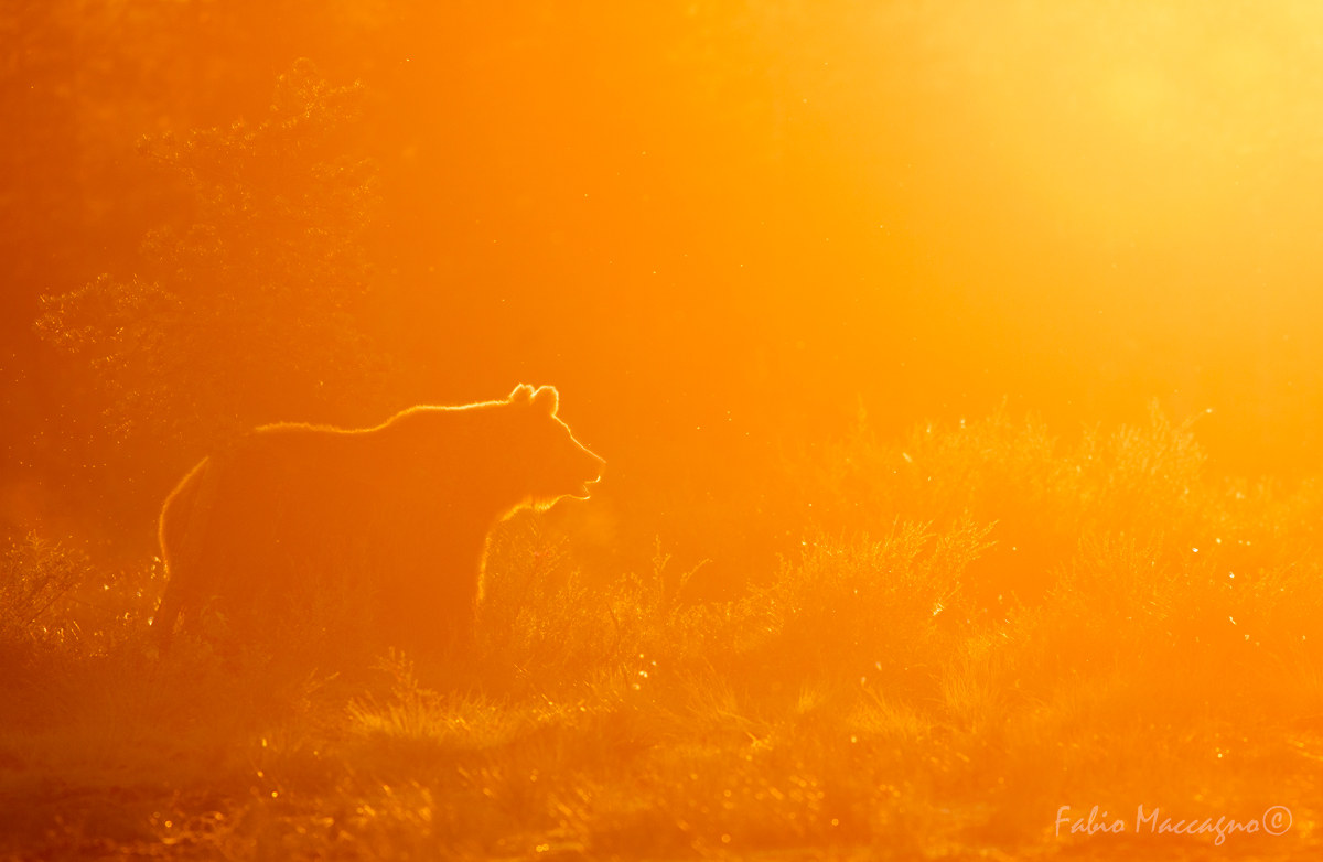 Unforgettable sunset...