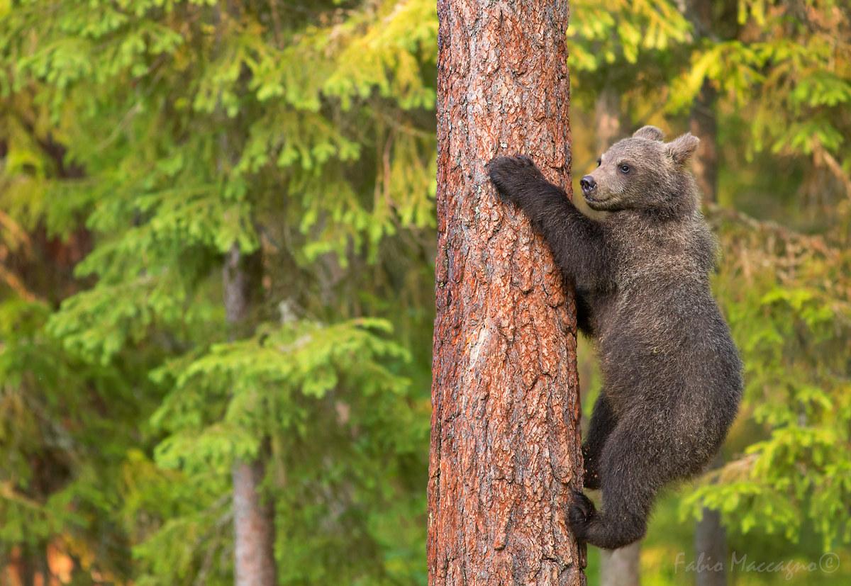 Young climber...