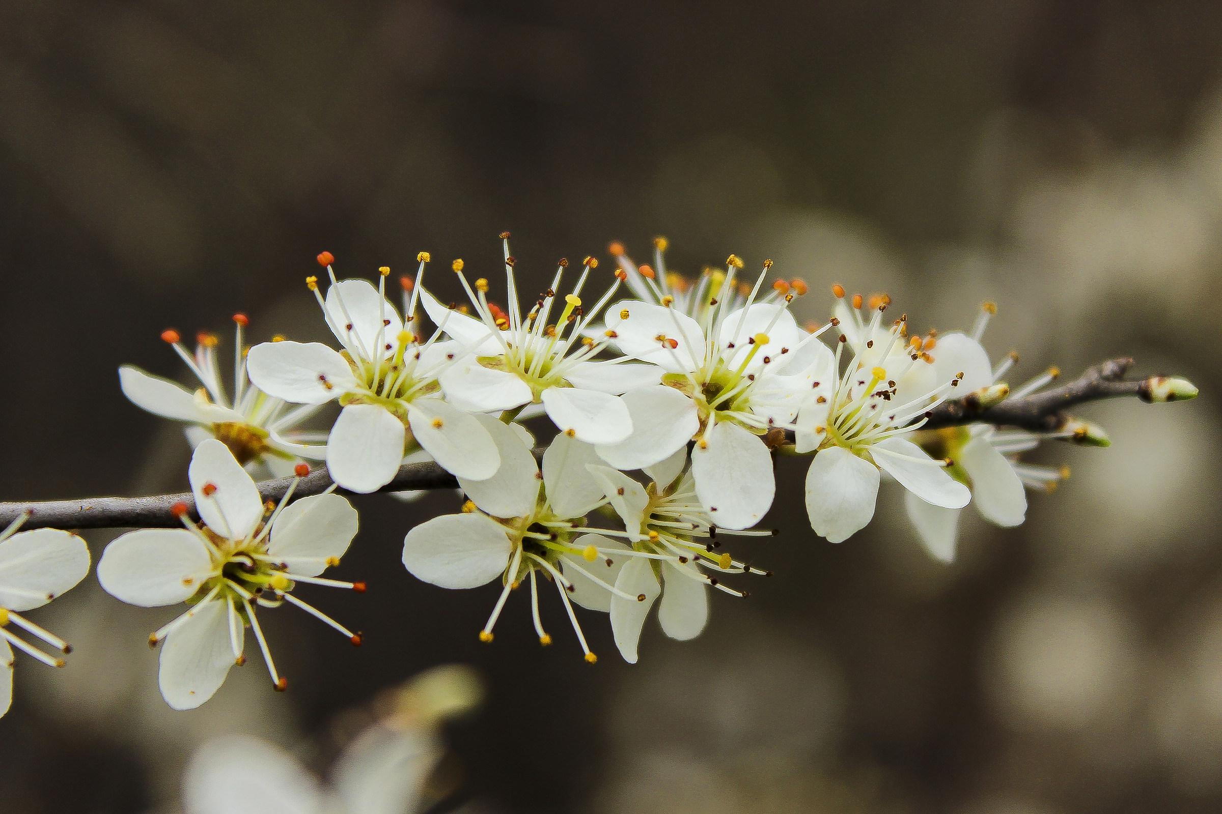 Delicate floral...