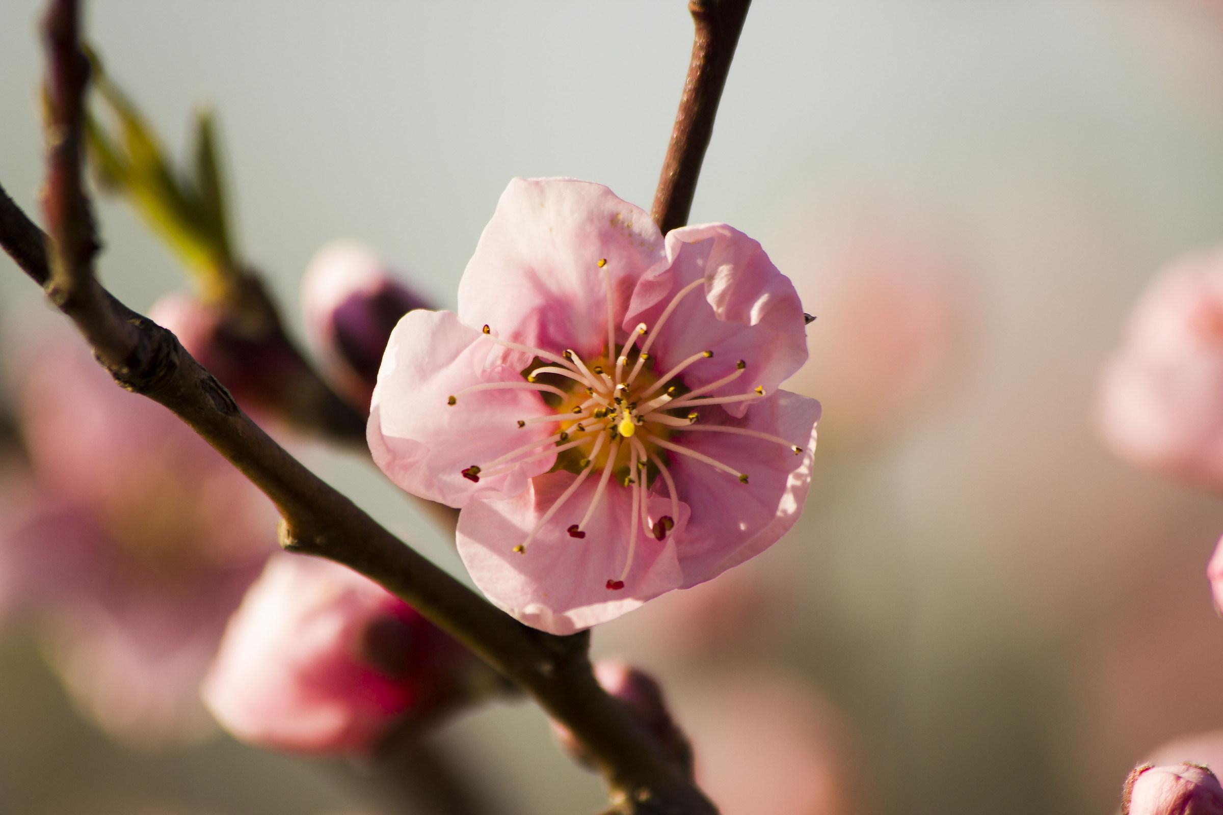 Pink spring...