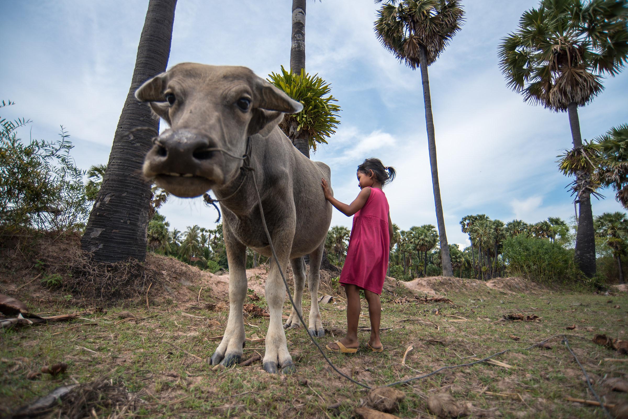 Water buffalo e giovane cowgirl...