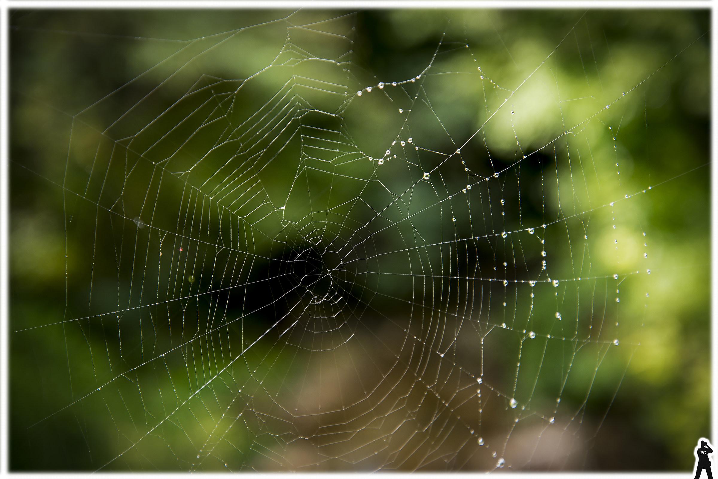 Cobweb ... second test D610...