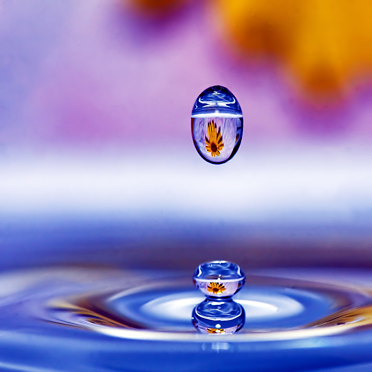 water and flower...