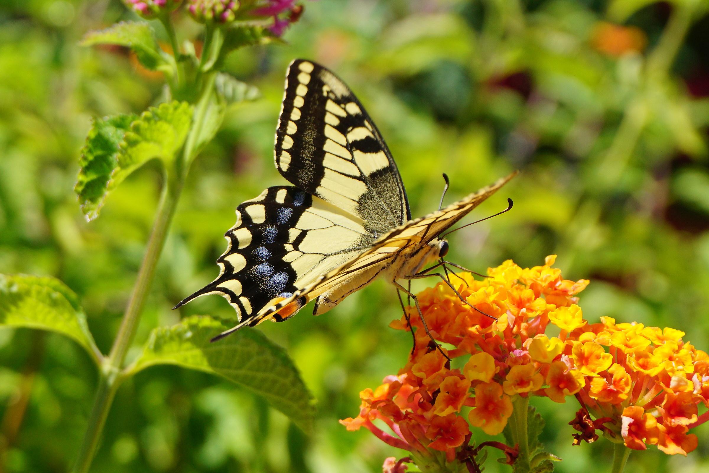 Still butterflies...
