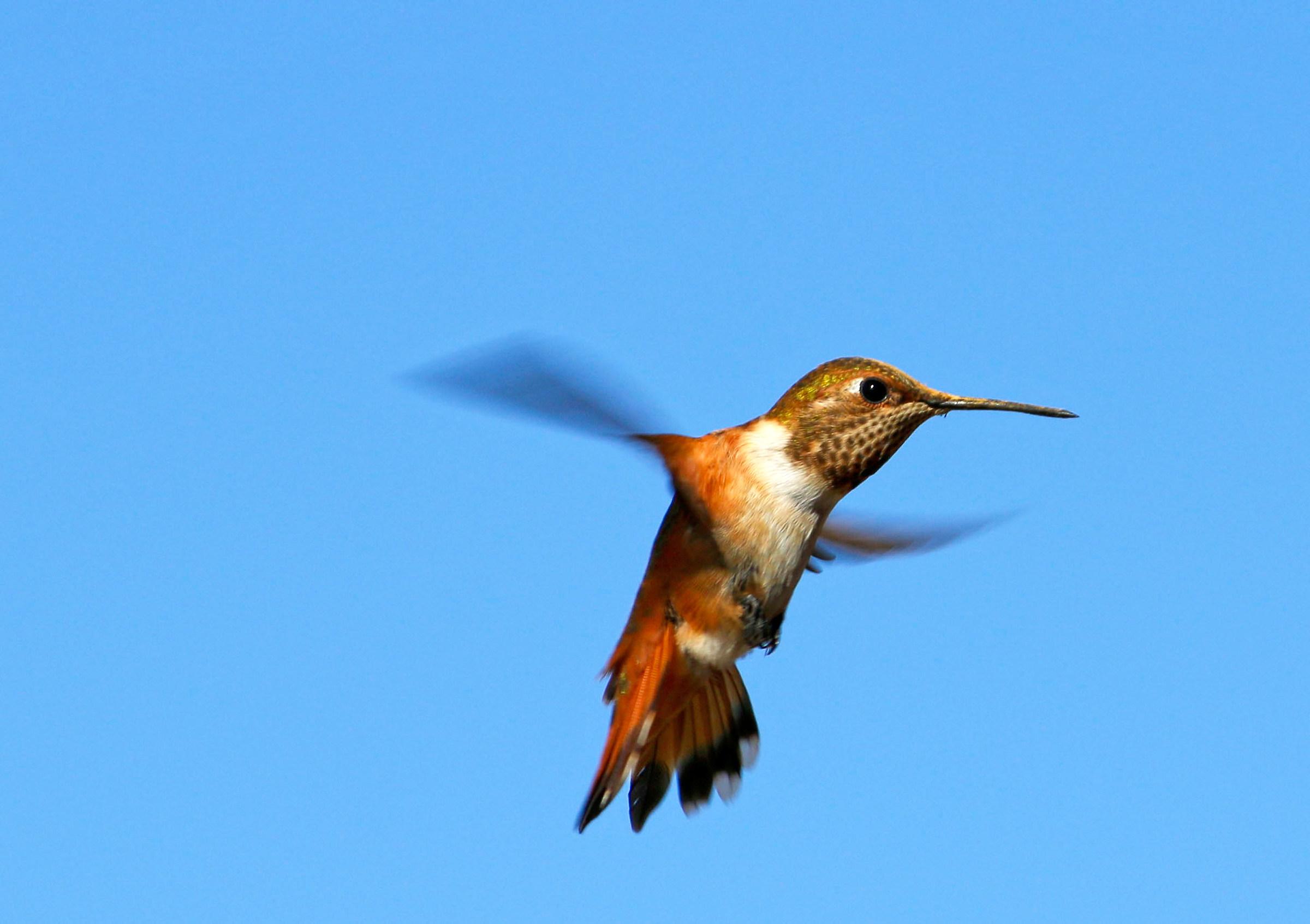My first hummingbird...