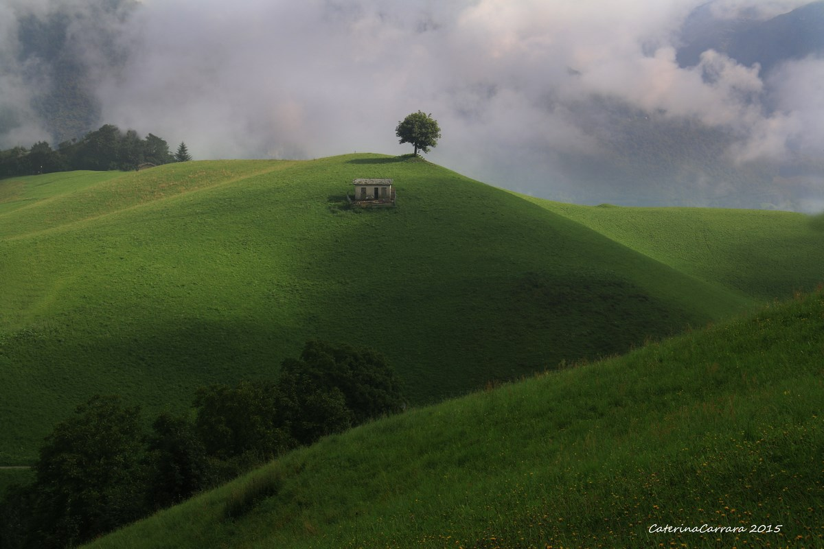 The tree on the hill....