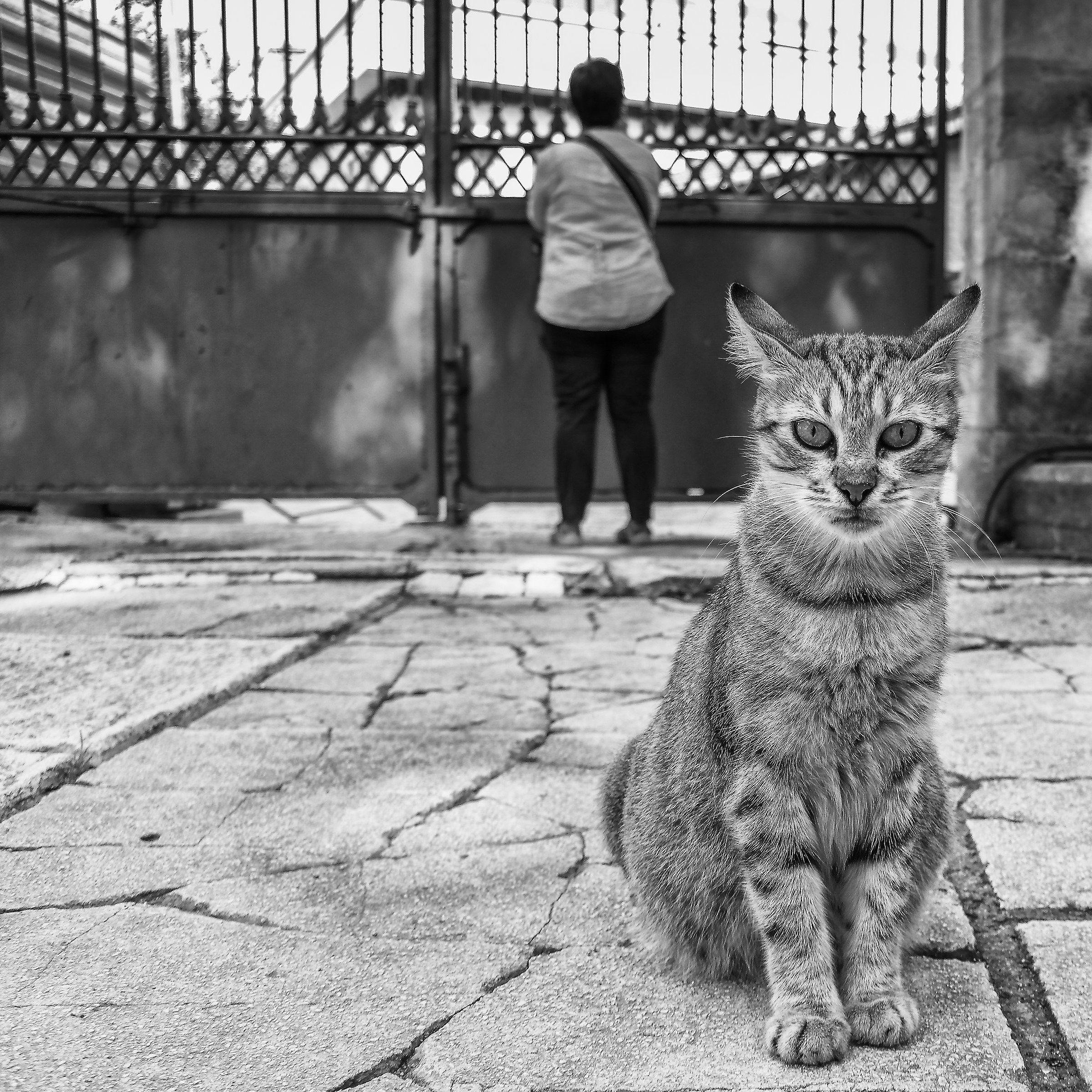 L'uomo e il gatto......