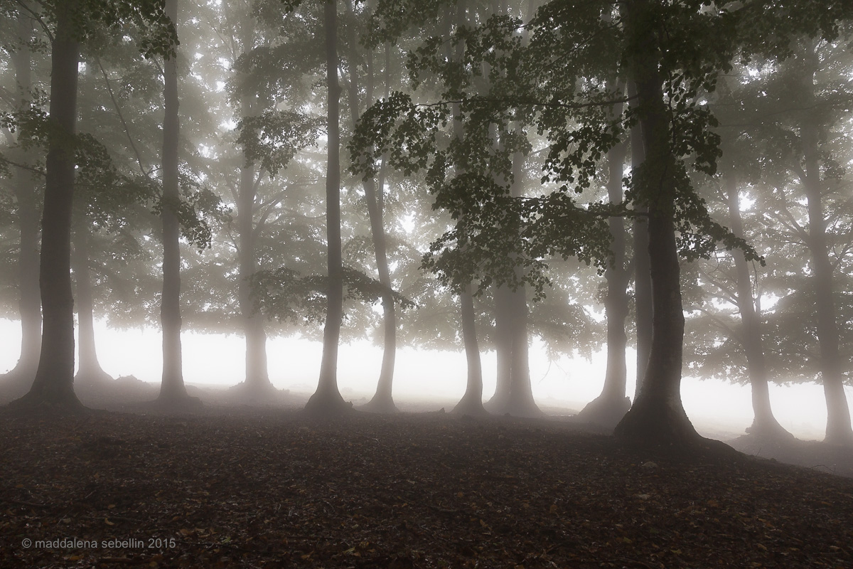 First mists of autumn...