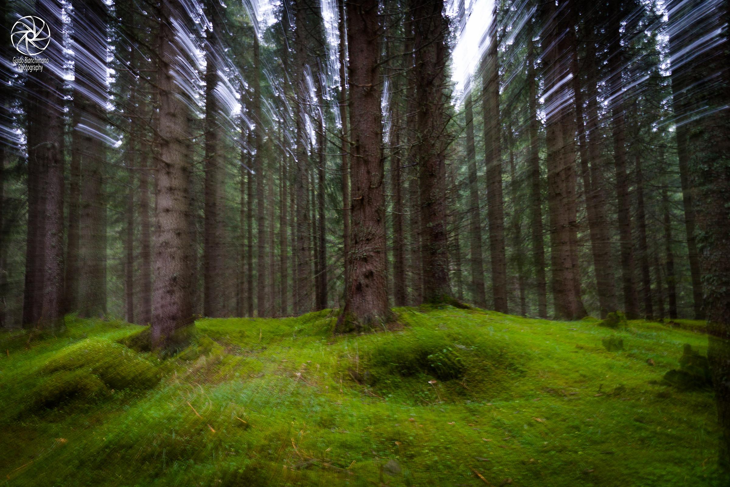 Dynamics Woods...