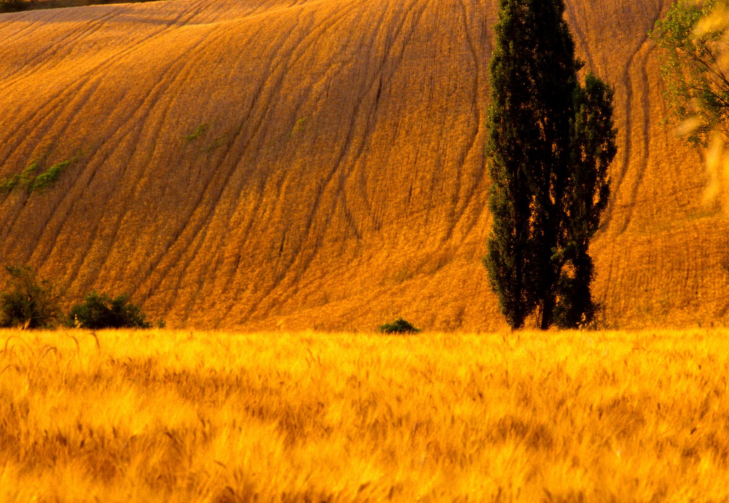 Pesaro hills...
